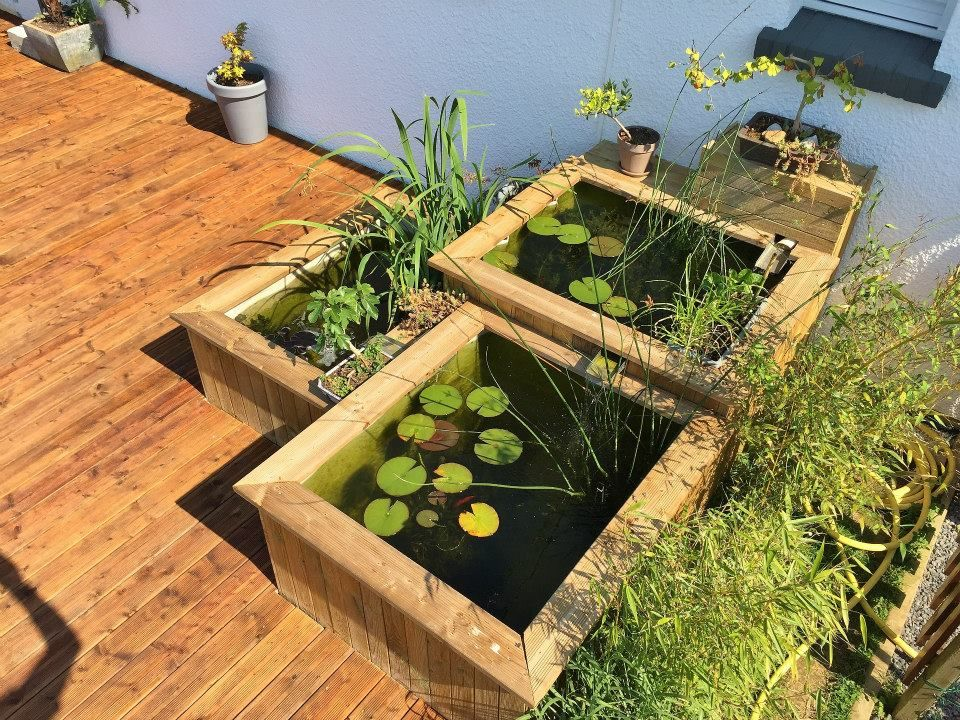 Aquario-philrecifal  Bassin Jardin Idées jardin Pinterest