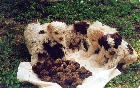 Truffles from the Molise region of Italy!
