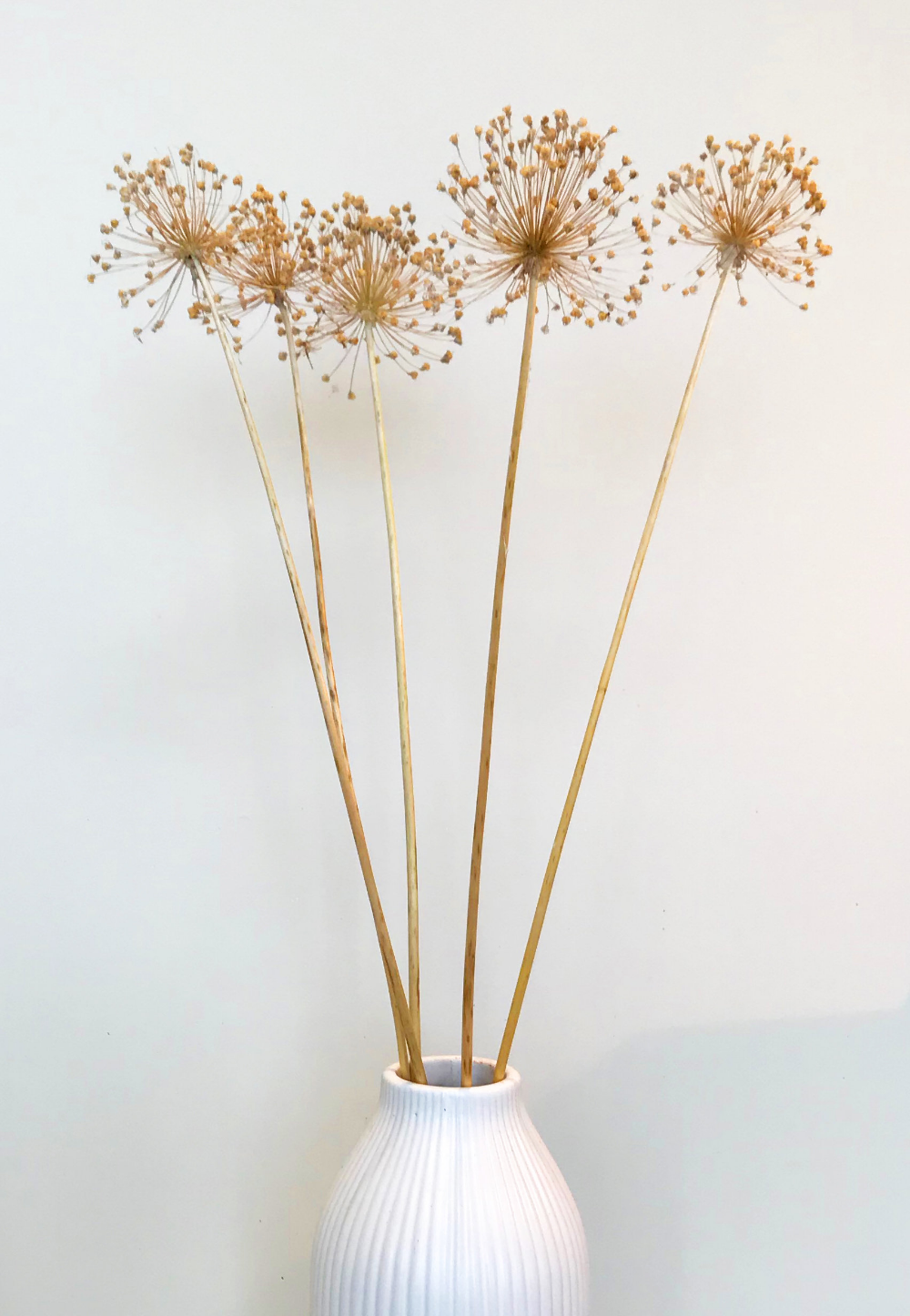 Naturally Dried Giant Allium Flower For Dried Flower Etsy Flower Arrangements Allium Flowers Dried Flower Arrangements