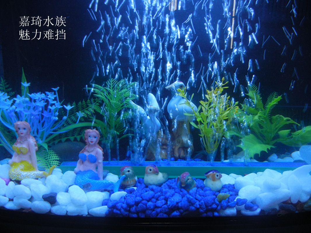 Small fish tank decorations 1066 800 for Small fish tank