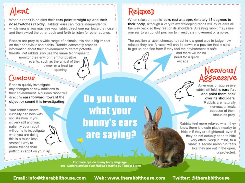 Rabbit care Pet Bunny Tips Pinterest Language, Body