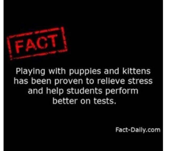 I should get a puppy:)