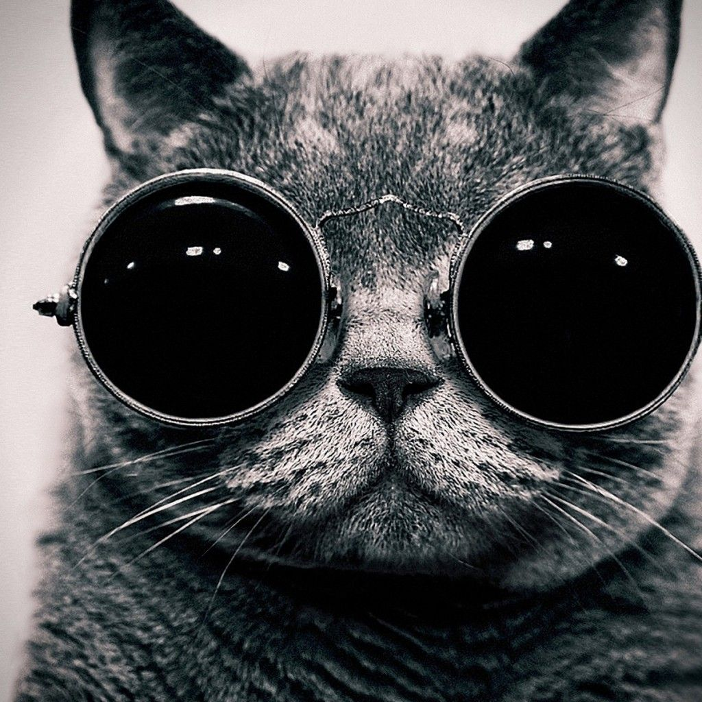 Cat With Sunglasses Ipad Wallpaper Hd Steampunk Cat Cat