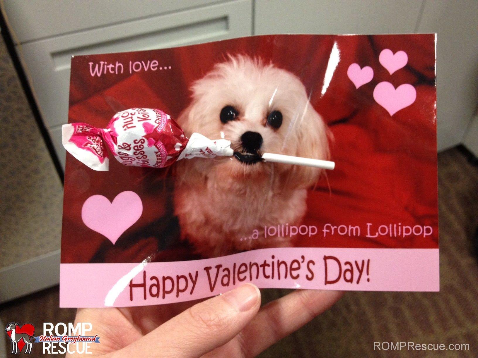 Diy Dog Valentine S Day Vday V Day Valentines Day Card Dog