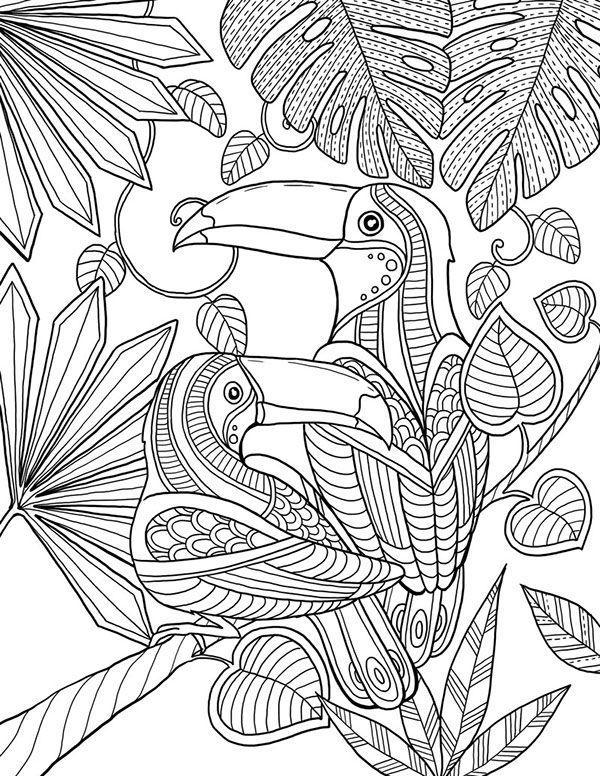 Toucan Coloring Pages Bird Coloring Pinturas De Passaros