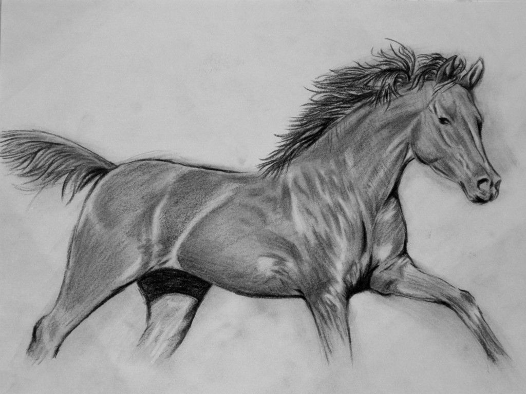 horse drawings  I think it should be a little fatter and then it would be perfect!