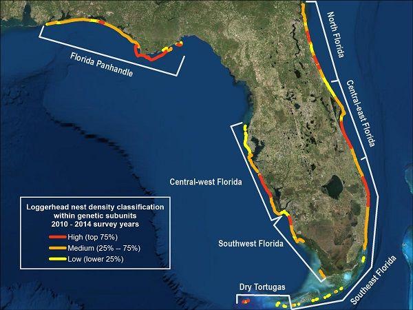 Map Florida Panhandle.Protect Our Ocean Visitors Loggerhead Nest Density Map Florida