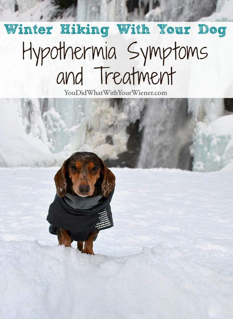 Winter Hiking With Dogs: Watch for Hypothermia | Pet Safety