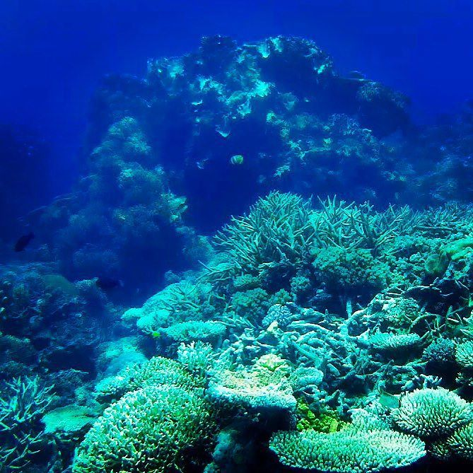 Endless Ocean #underwater #scubadiving #greatbarrierreef #flynnreef #australia #queensland #diving #blue #goexplore #peaceful #coralgarden #corals by marvin_keppler http://ift.tt/1UokkV2
