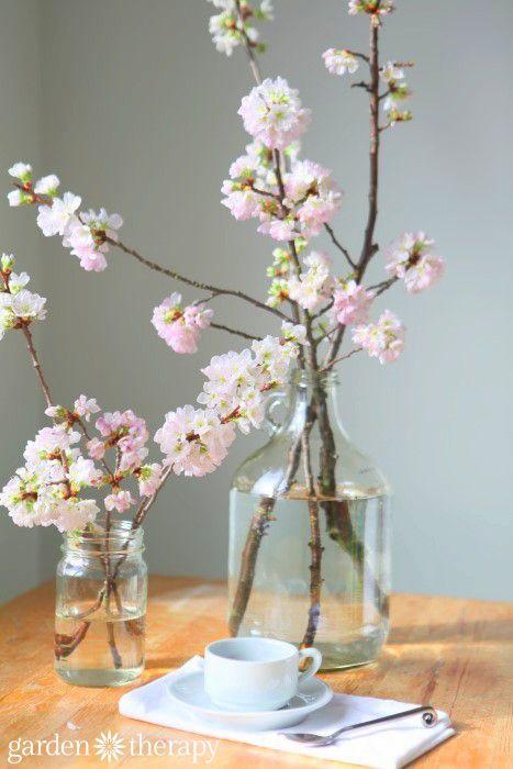 Pin On Garden Tips Ideas