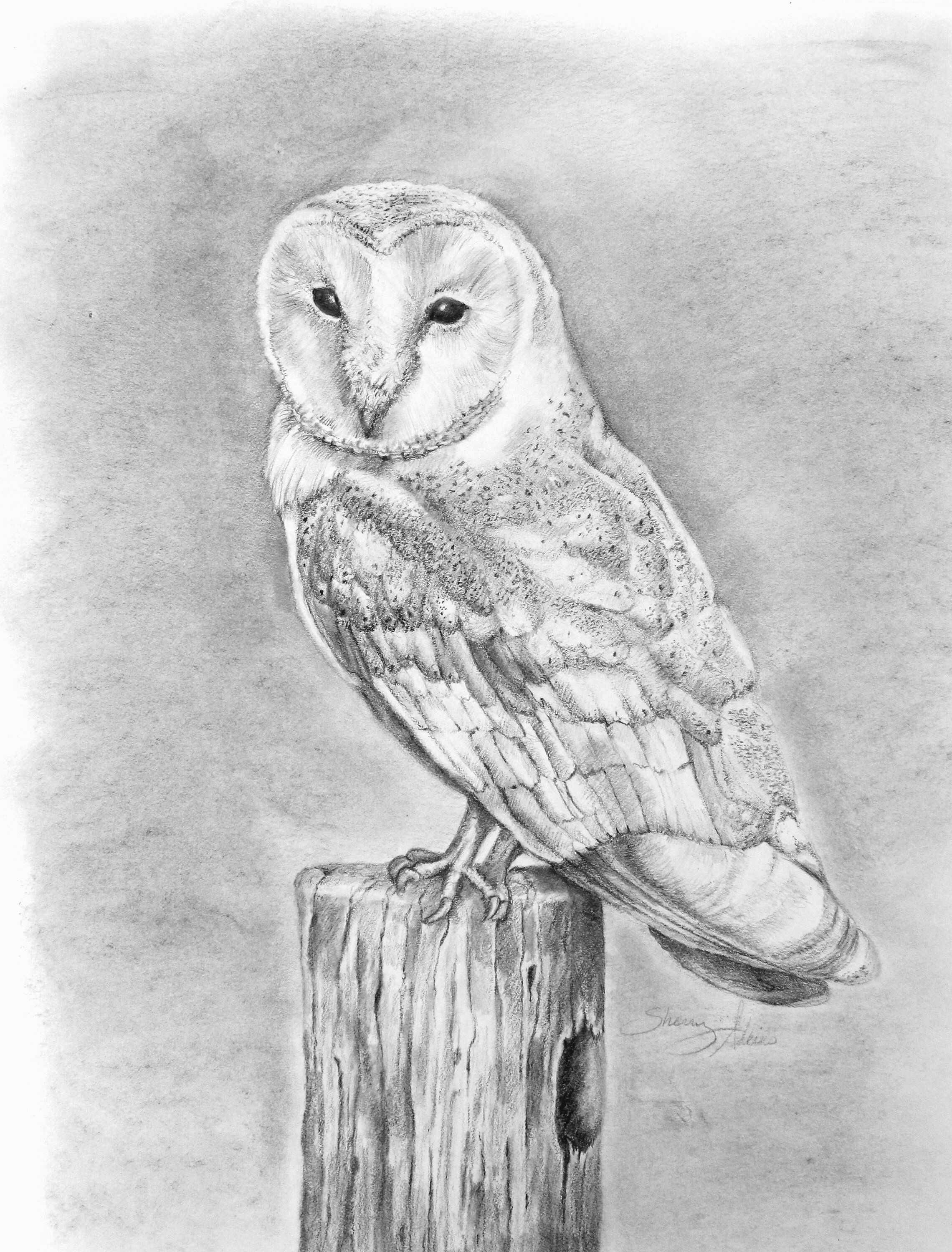 Barn owl pencil drawing print art by sherry adkins pencil