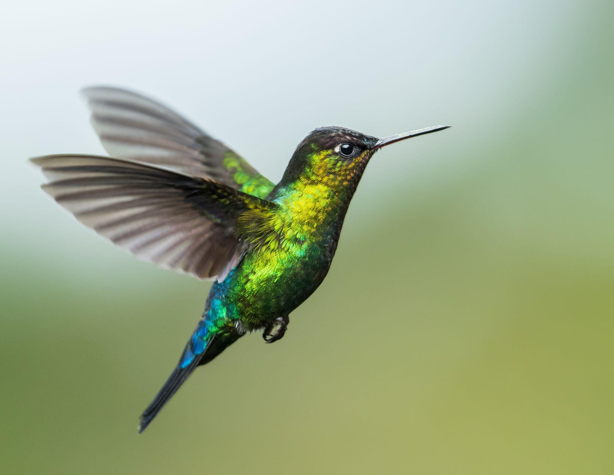 14++ Magnificant hummingbird ideas