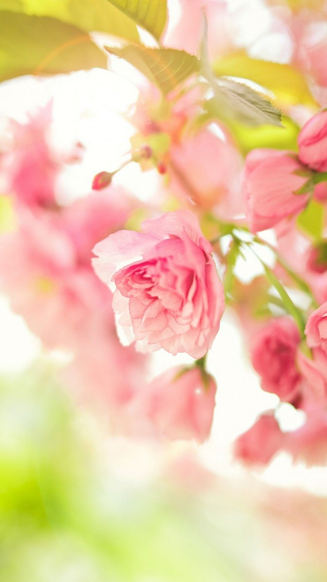 Spring Season Mobile Wallpaper HD Hd wallpapers for