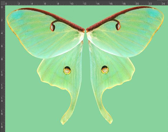 Green Luna Moth Halloween Costume Wing Fabric. These Are Scaled For A Child  (fairy Wings For Children). This Style Is One Of My Favorites In My  Collection ...
