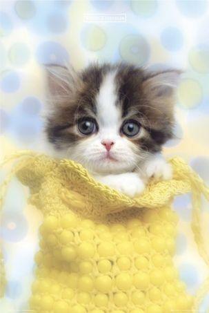 Cute little kitten.