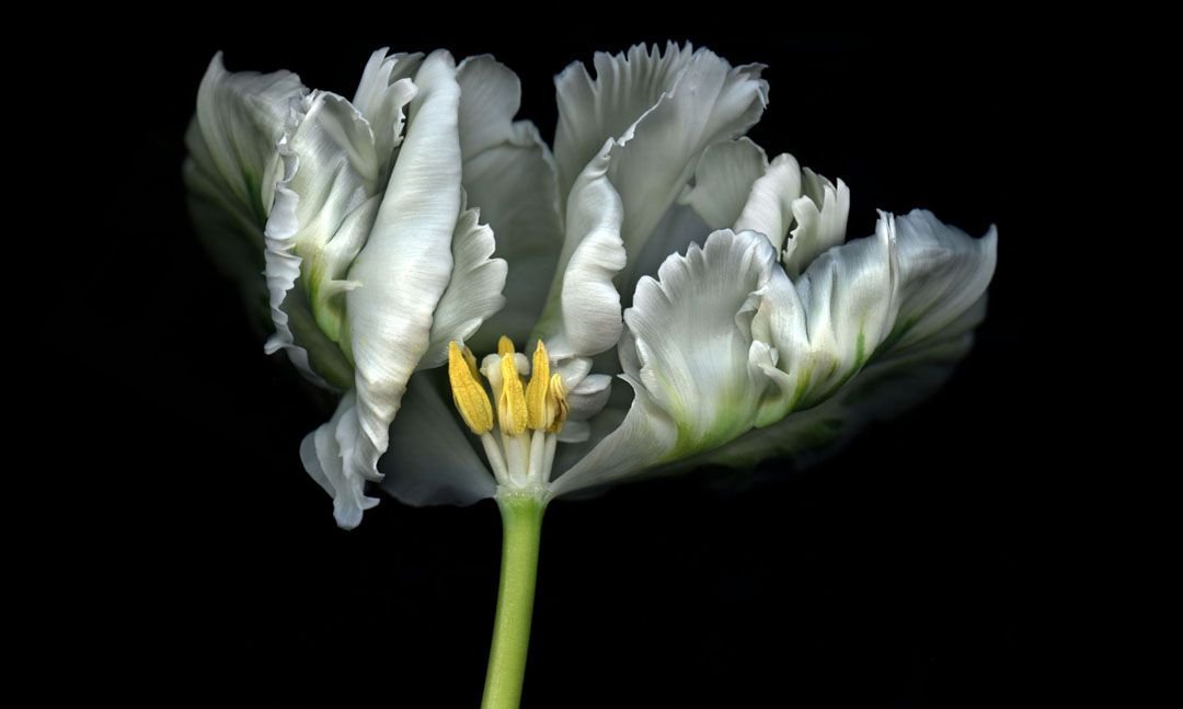 Forsyth Flower