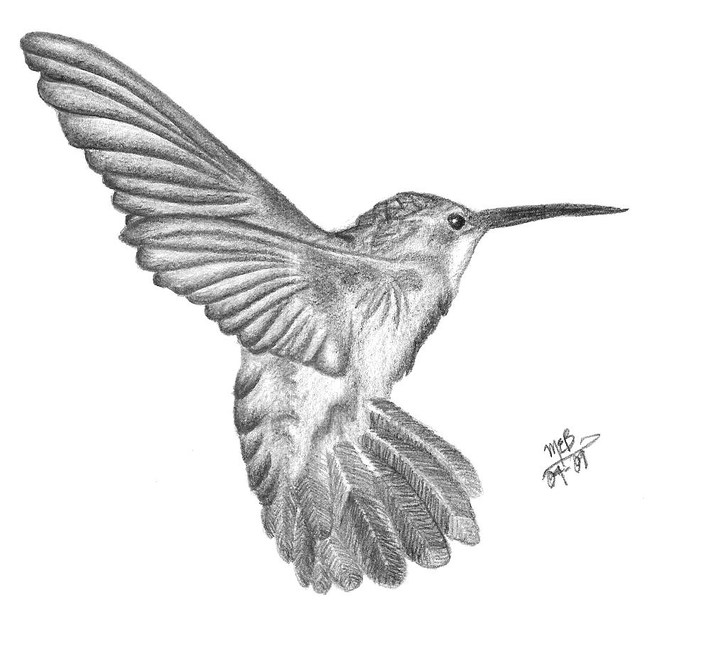 Pencil Sketch Hummingbird