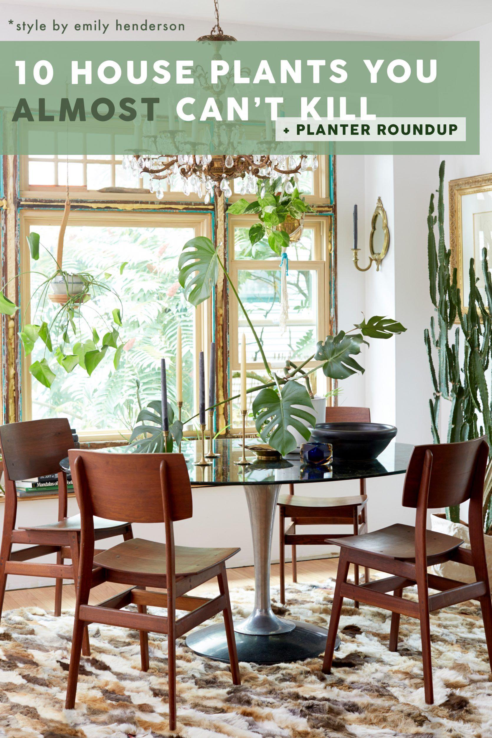 The Best Easy To Care For Indoor Plants Even Beginners Won T Kill Indoor Plants Easy Indoor Plants Best Indoor Plants