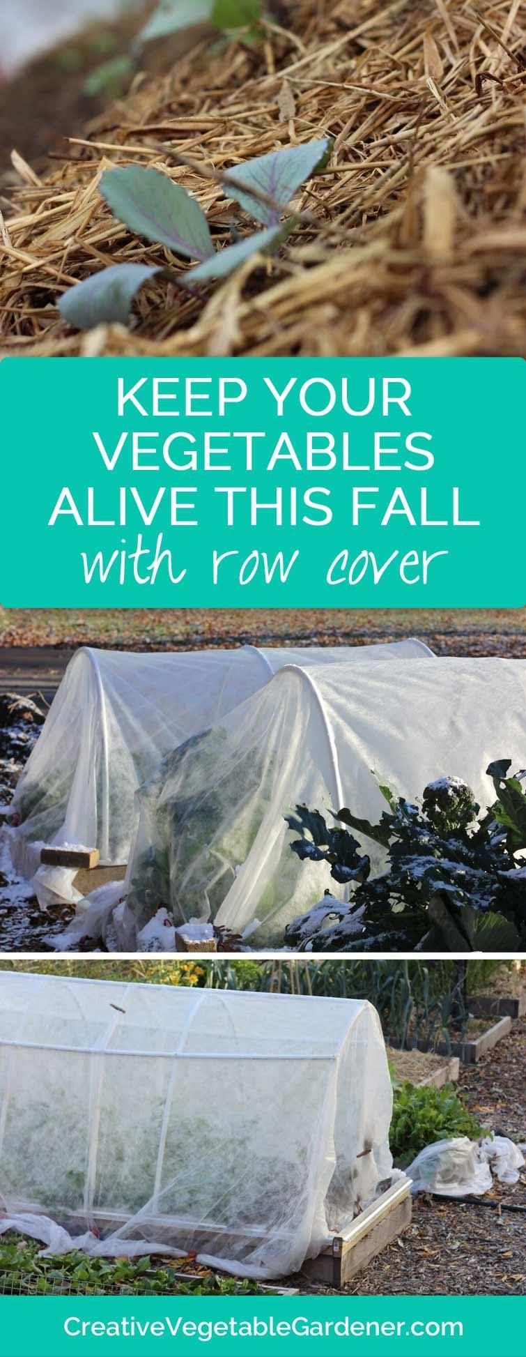 protect your plants with row cover veggies winter and gardens