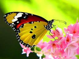 butterfly - Cerca con Google