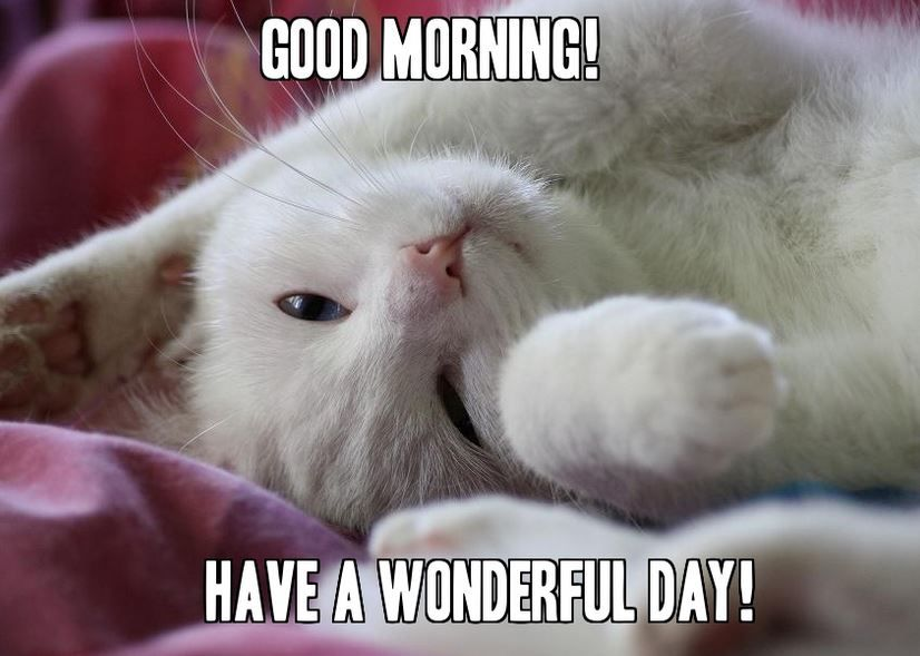 Cute Cat Good Morning Memes For Her Meme Good Morning Images