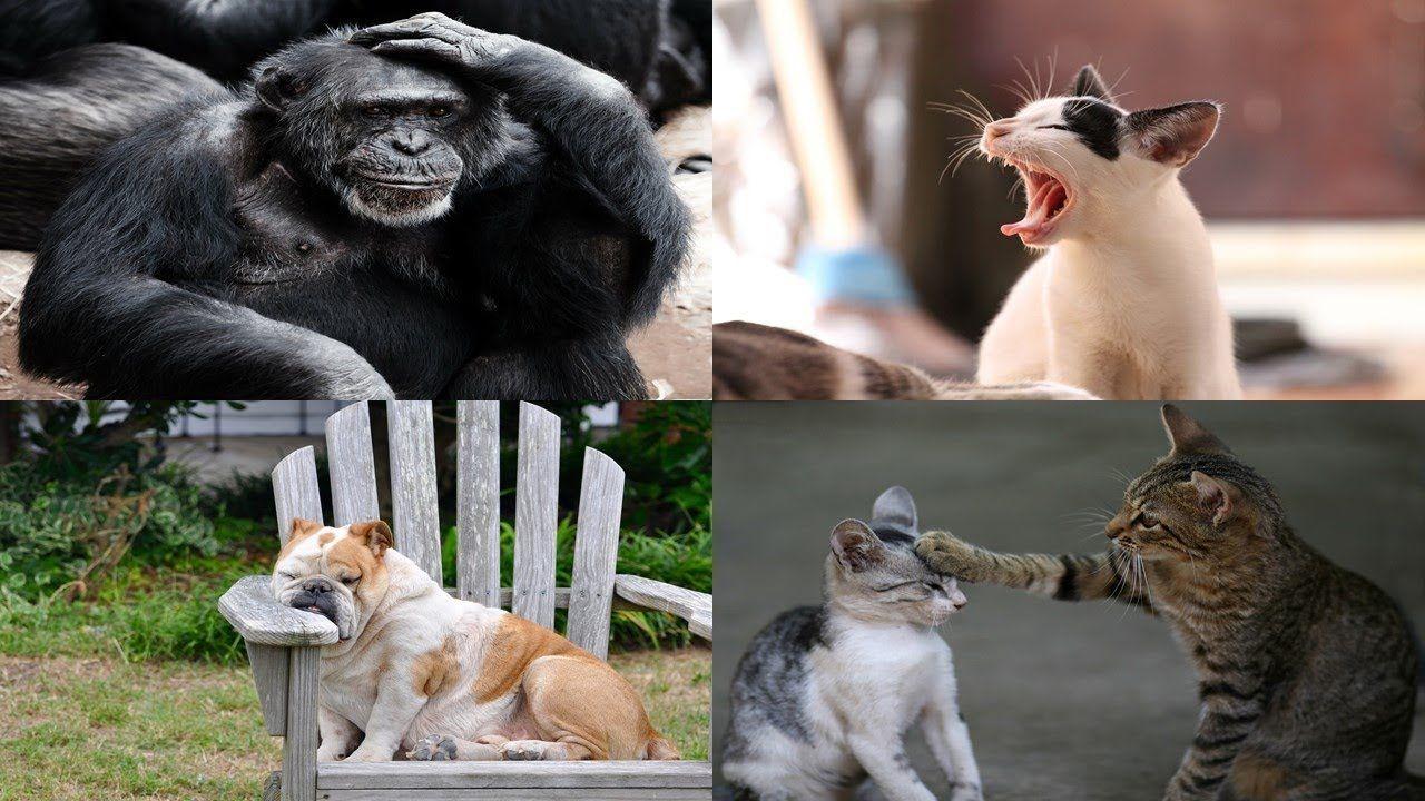 top 10 funniest animals, funniest animals, funniest animal