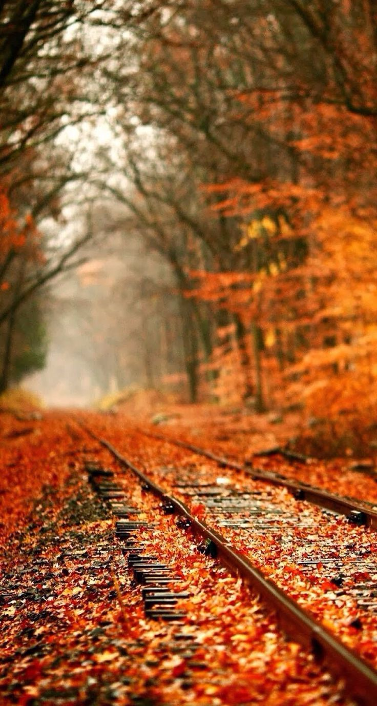 Latest Top 10 Good Looking Fall Season Lock Screen For Iphone 11 Pro Max Wallapapers For Iphone
