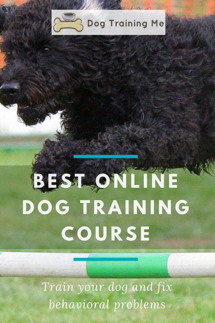 The Best Online Dog Training Course Is Like Having Your Own Professional Dog Trainer On Call To Help Y Online Dog Training Dog Training Dog Training Techniques