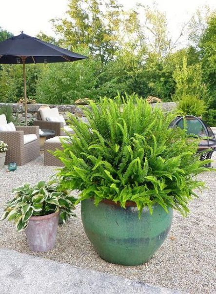 Plants outdoor potted full sun 59 Ideas Plants outdoor potted full sun 59 Ideas