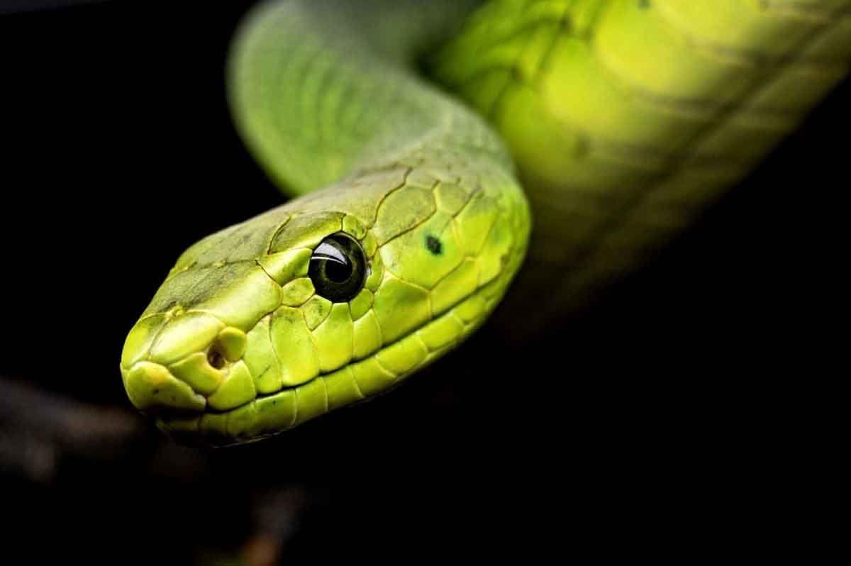 Ruyada 3 Yilan Gormek In 2021 Beautiful Snakes Snake Reptiles