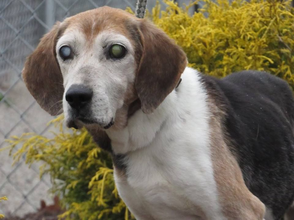 RALPHIE Blind dog needs a home Isle of Wight County