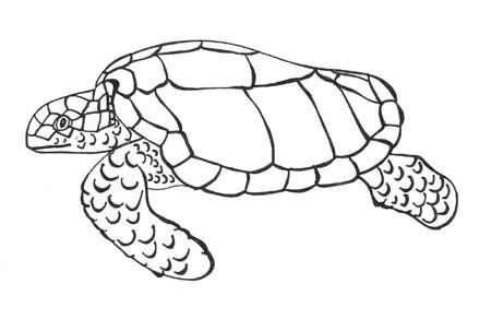 Completed Jpg 450 292 With Images Turtle Drawing Turtle