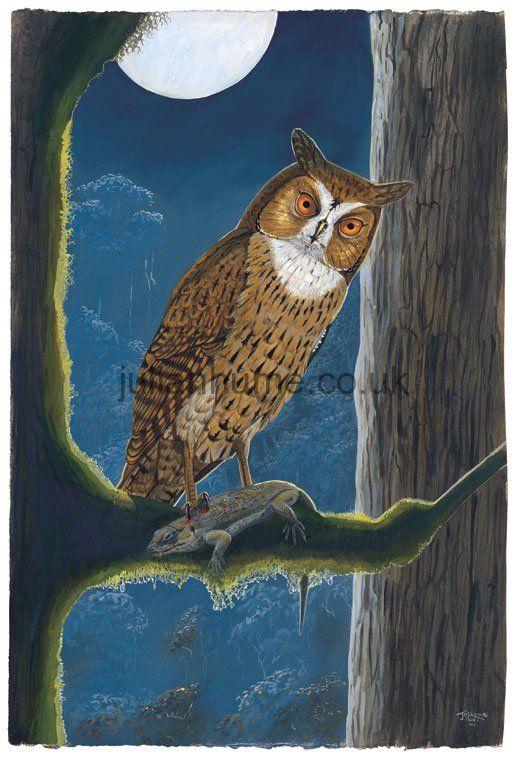 Mauritius Owl (Mascarenotus sa...