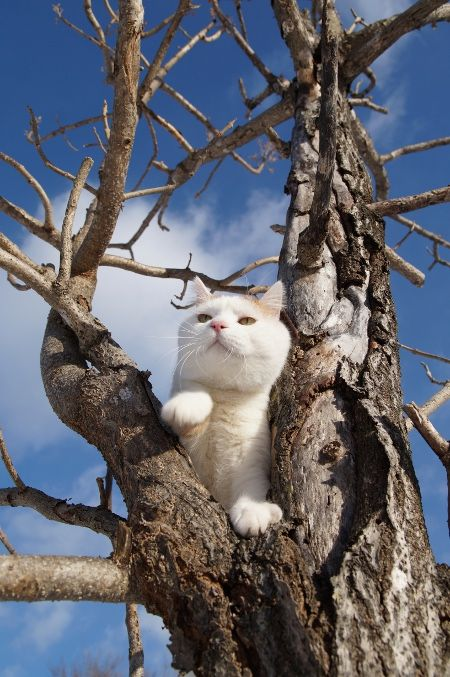 Image result for shironeko tree