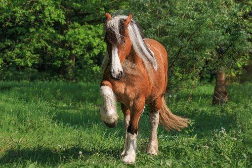 Free Image On Pixabay Horse Trick Kaltblut Feat Sweet Horses Horse And Human Chestnut Horse
