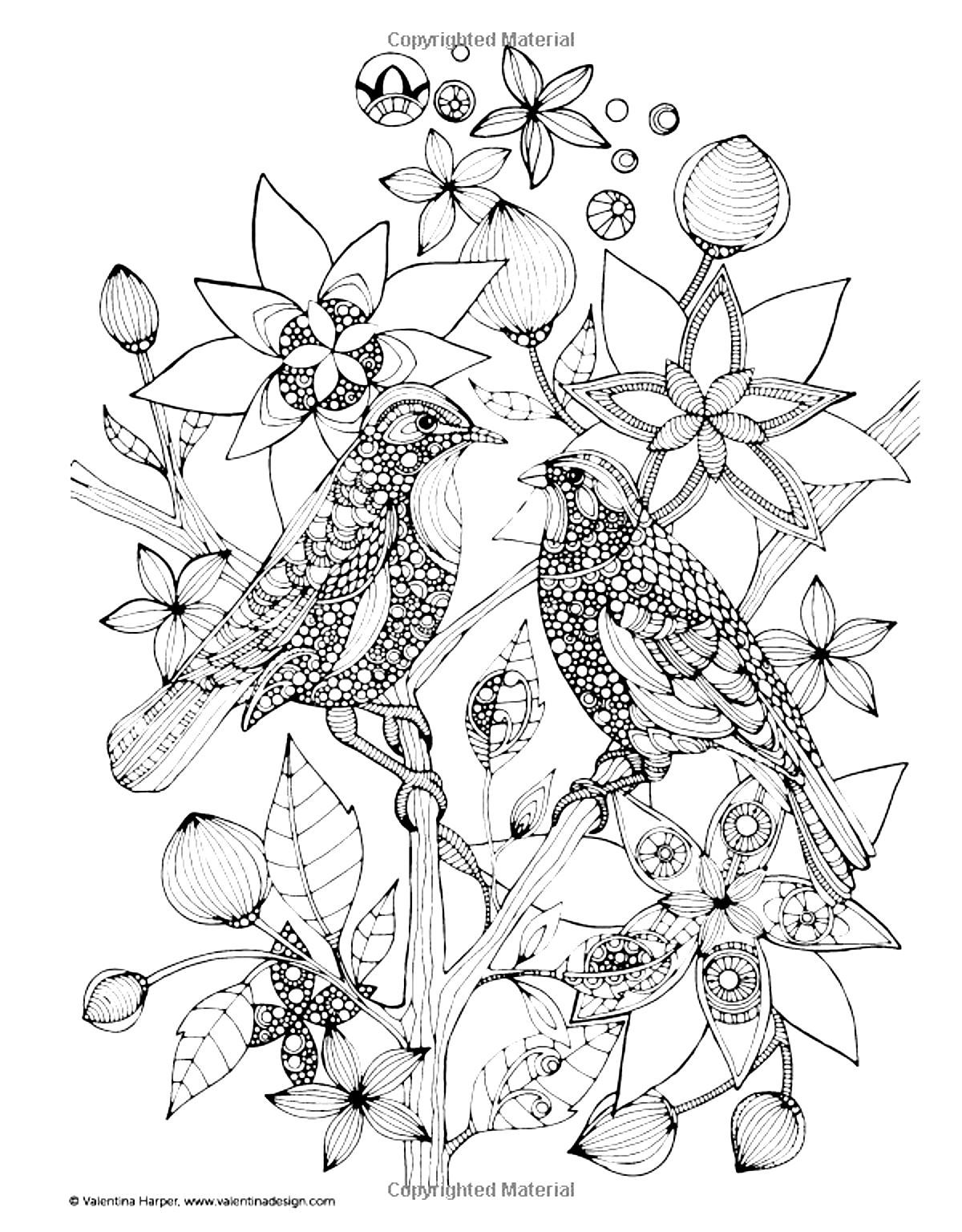 To print this free coloring page «coloring-adult-two-birds», click ...
