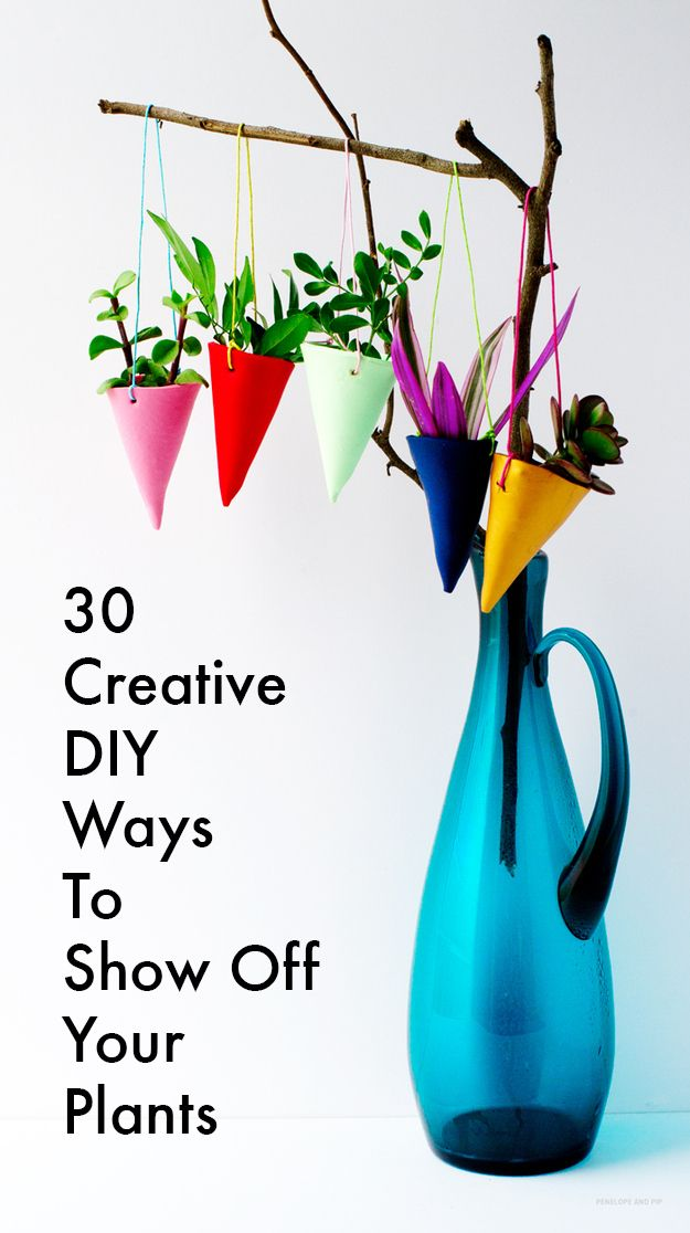 36 Ways To Diy Every Part Of Your Life Buzzfeed Plants And Air Plants