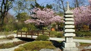 Ein Japanischer Garten In Wien Es Gibt Noch So Viel Zu Entdecken In Dieser Stadt Garten Gartengestaltung Japanischer Garten