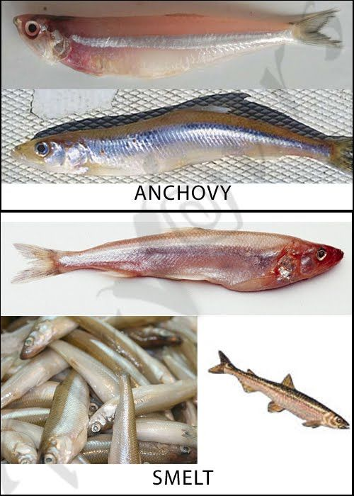 Anchovy Bhutai With Images Over Fish Fish Healthy Cooking