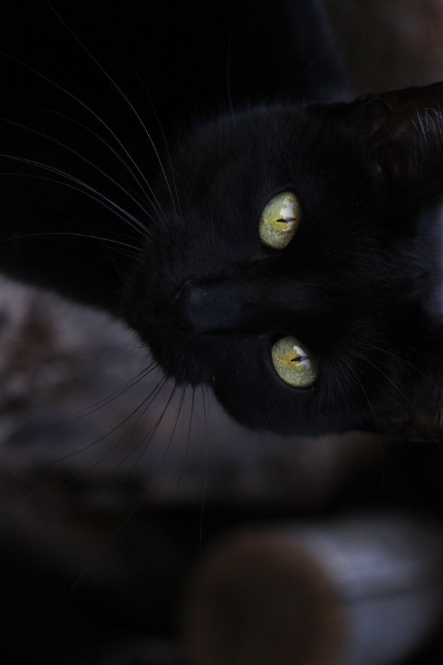 Ally the black cat