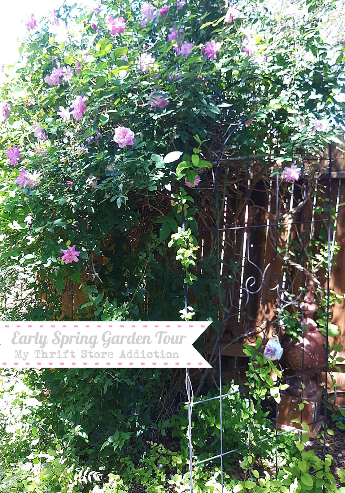 Early Spring Garden Stroll in 2020 Spring garden