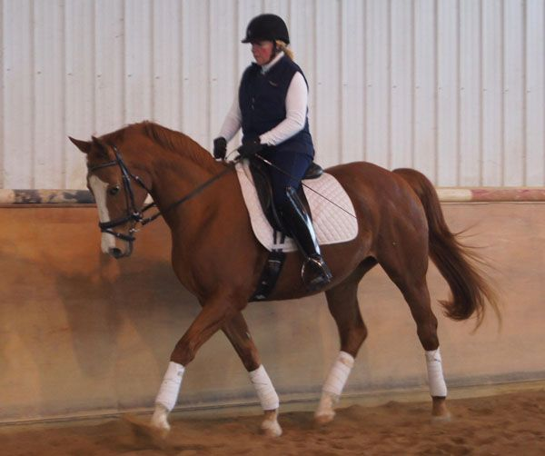 IA Collective Art - Exceptionally well behaved American Warmblood mare with three, lovely gaits. Solid 2nd level with 3rd//4th training. Easy to ride! $18,500