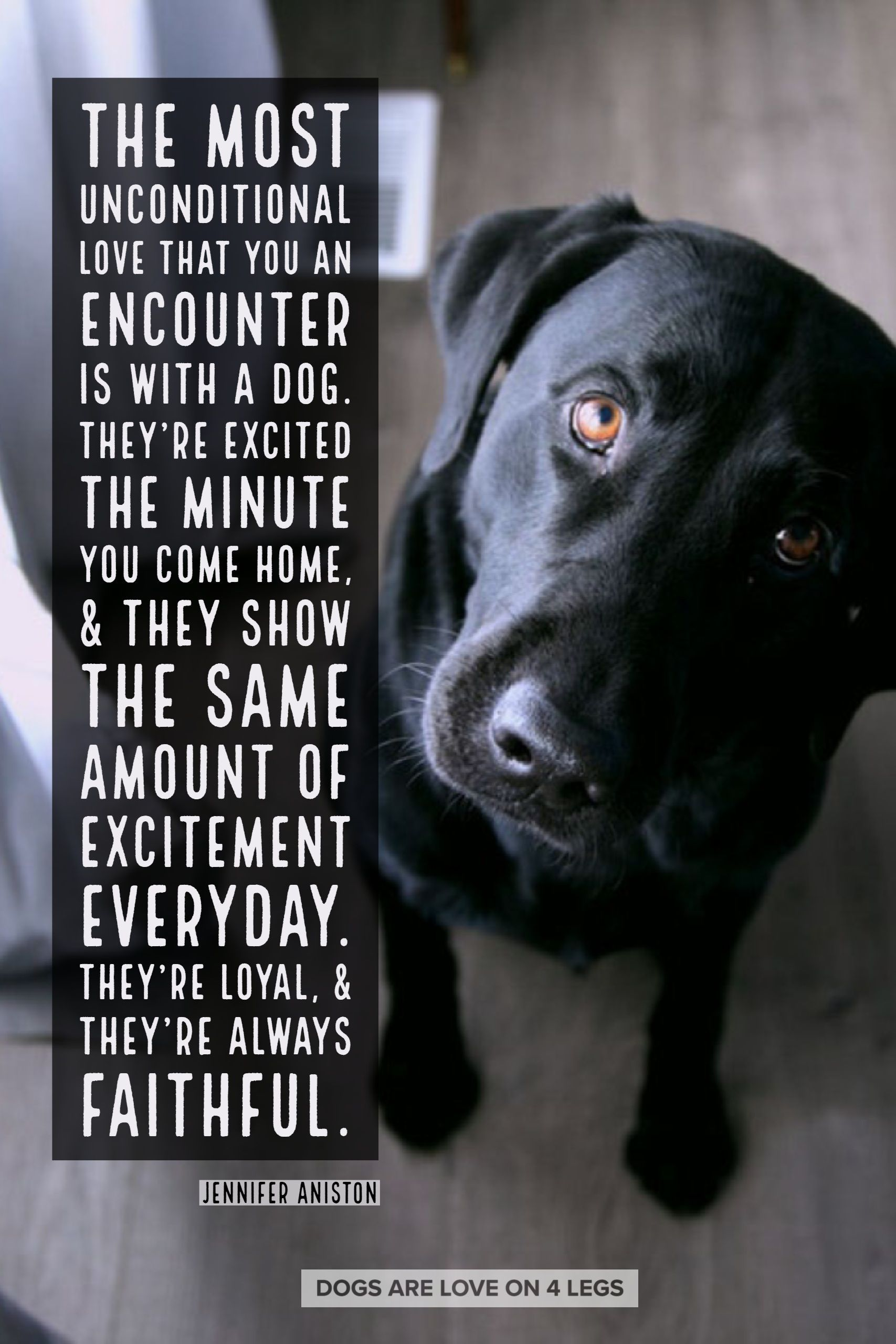Dog Quote The Most Unconditional Love That You Can Encounter Is