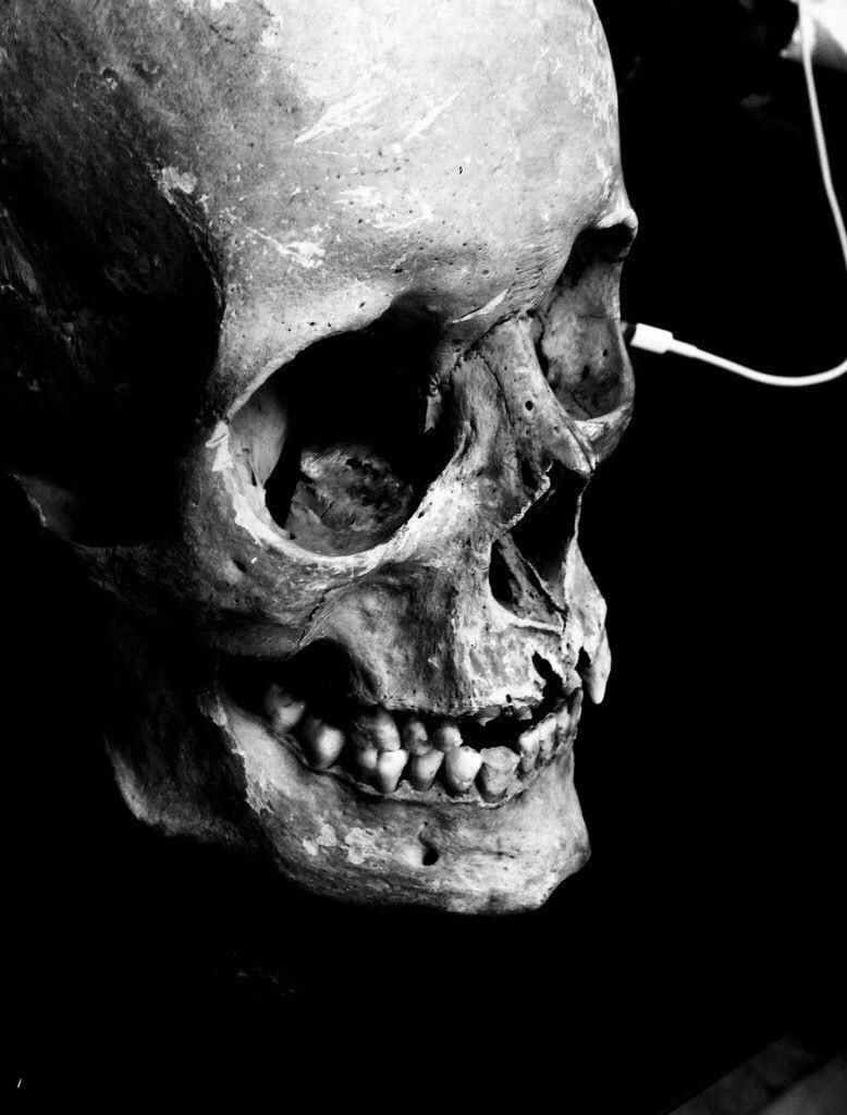 Human Jaw Tattoo: Human Skull Photography, Skull Anatomy, Skull Art