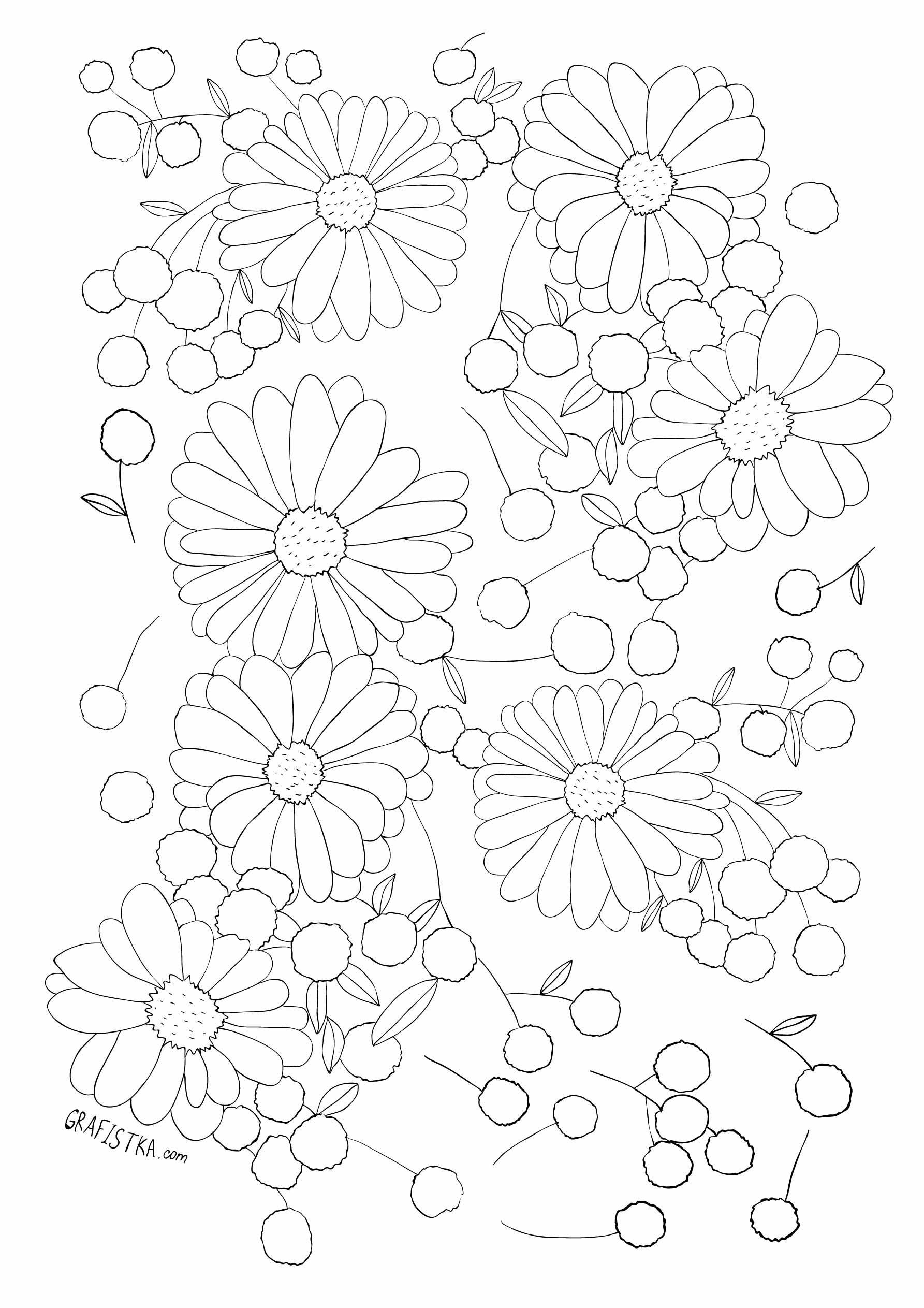 Malowanie Antystresowy Kwiaty Stokrotki Kolorowanki Dla Dorosłych