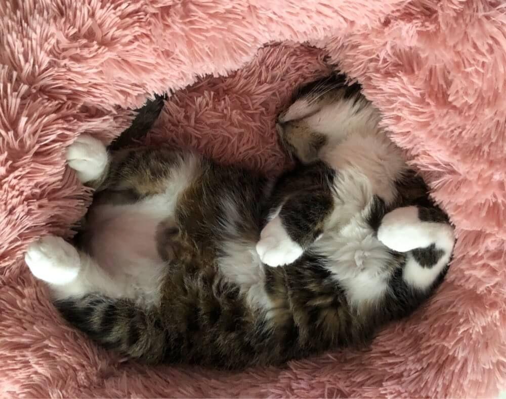 Comfy Calming PET Bed Cat day, Pet odors, Cat sleeping