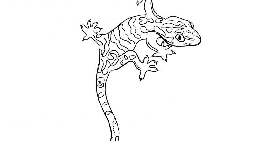Gecko Coloring Page 5