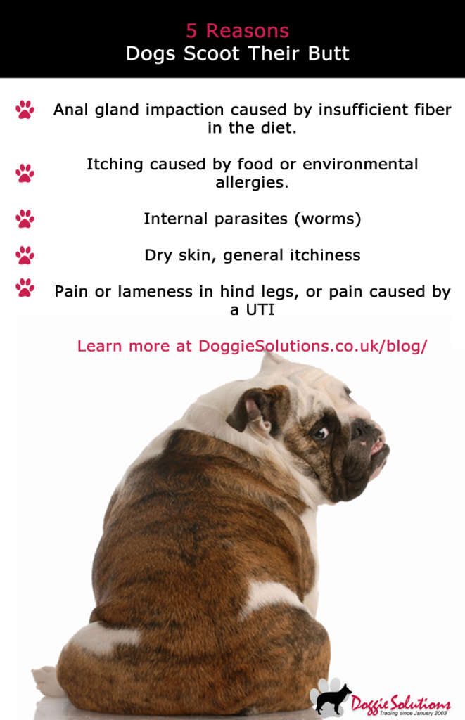 Pin On Doggie Solutions Blog