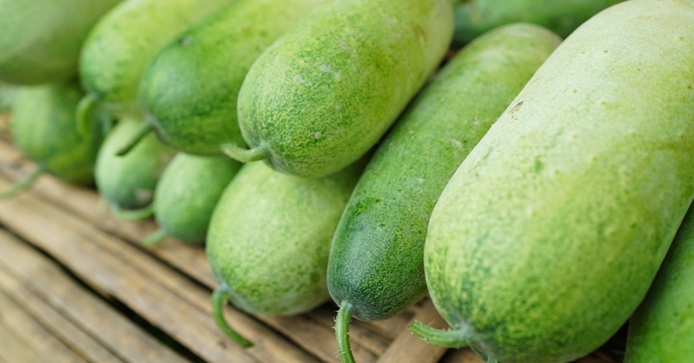 Ash Gourd (Winter Melon): Nutrition, Benefits, and Uses
