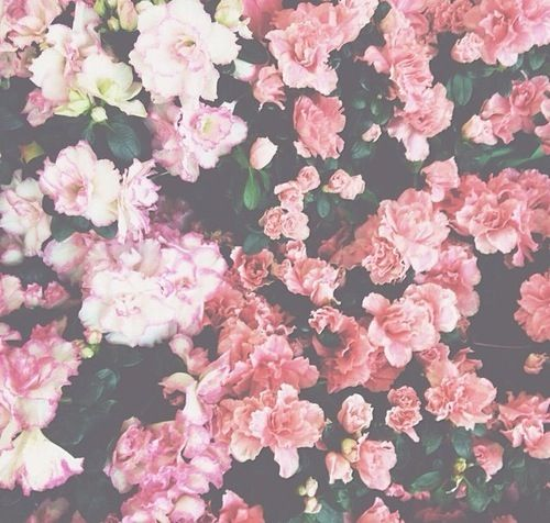 Background Cute Floral Flower Flowers Girly Hipster Nature Over Overlay Pastel Pink Vintage